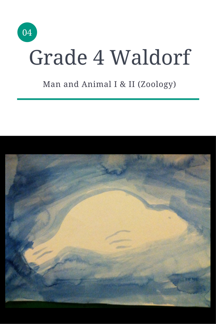 Waldorf Curriculum - Man and Animal